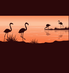scenery at sunset with flamingo silhouettes vector image