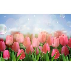 Pink tulips flowers in the garden vector image vector image