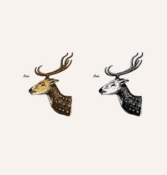 horn and antlers animals impala gazelle and vector image