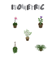 Isometric plant set of fern flower plant and vector