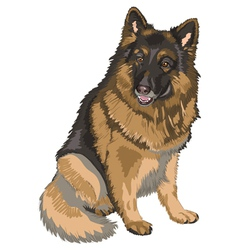 german shepherd breed vector image