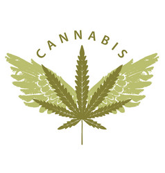 banner for marijuana with cannabis leaf and wings vector image