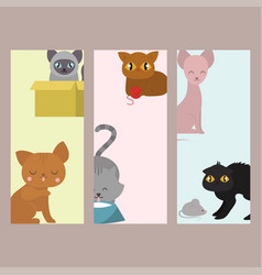 Cute cats cards character different pose funny vector