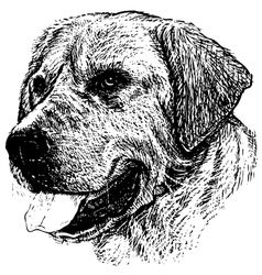 Labrador Retriever 03 1 vector