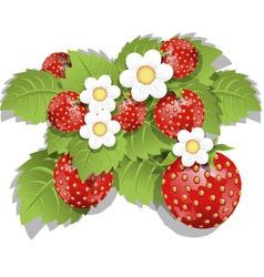 strawberry bush vector image