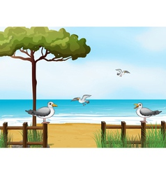 Birds looking for foods at the beach vector image