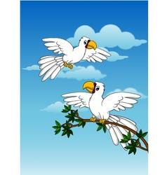 cute couple white parrot vector image