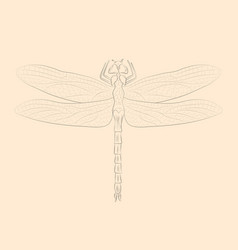 Dragonfly hand drawn isolated sketch vector