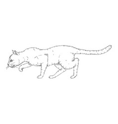 Sneaking cat black sketch feline vector