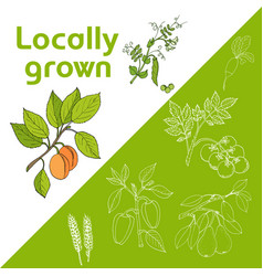 vegan farmer market card with fresh vegetables vector image