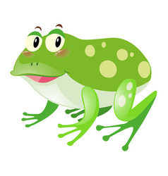 green frog with happy face vector image