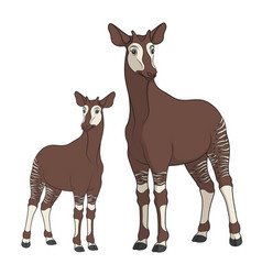colored with okapi image vector image