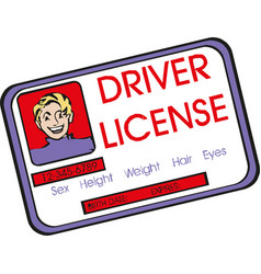 drivers licence with male icon vector image