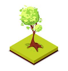 green ash tree isometric 3d icon vector image