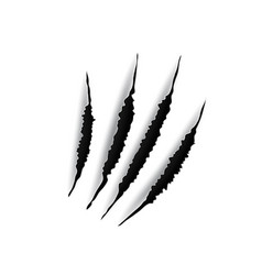 Animal claws marks scratches on white background vector