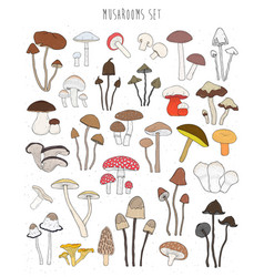 collection of hand drawn colorful mushrooms set vector image