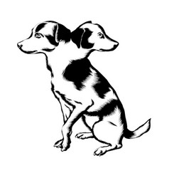 hand drawn dog with two heads vector image