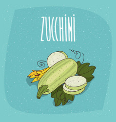 Isolated vegetable fruits courgette or zucchini vector
