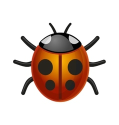Ladybird Bug on White Background vector