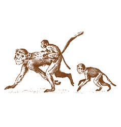 Monkeys or humanoid wild animals family in nature vector