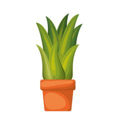 white background with corn plant in flower pot vector image