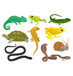 Reptile and amphibian set chameleon frog turtle vector