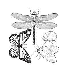 Set of insects like dragonfly butterfly ladybird vector