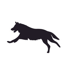 wolf runs image silhouette vector image
