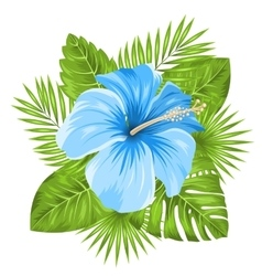Beautiful Blue Hibiscus Flowers Blossom and vector image vector image