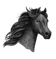 Portrait of beautiful purebred raven horse vector image