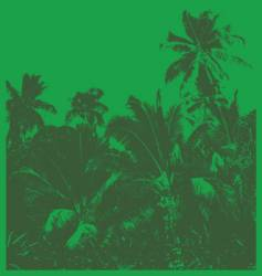 tropical jungle vector image
