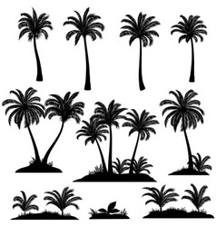 palm trees and plants silhouettes vector image