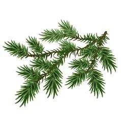Fur-tree branch Green fluffy pine branch vector image vector image