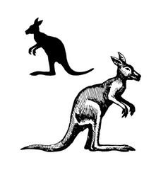 symbol of australia vector image