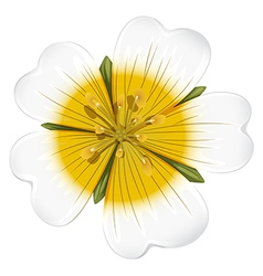 A white blooming flower vector