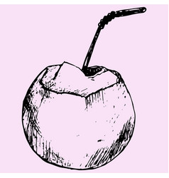 green coconuts vector image