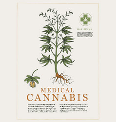 hand drawn botanical with a cannabis vector image