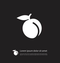 Isolated juicy icon apricot element can be vector