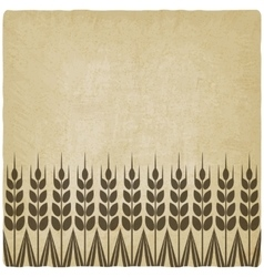 Ripe wheat ears old background vector