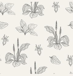 natural seamless pattern with flowering plantains vector image vector image