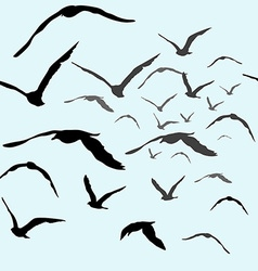Birds flying in the sky vector image