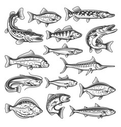 freshwater and ocean fish vector image