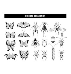 insect collection butterfly beetle dragonfly vector image