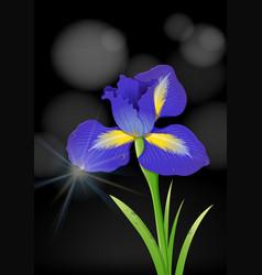 Iris flower on black background vector