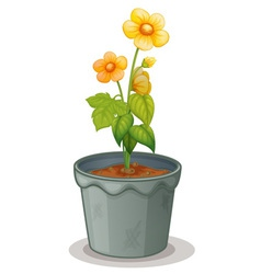 Pot plant vector image