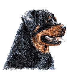 Rottweiler 04 vector