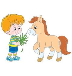 Boy feeds a pony vector image