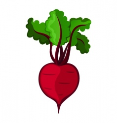 Beetroot vector image