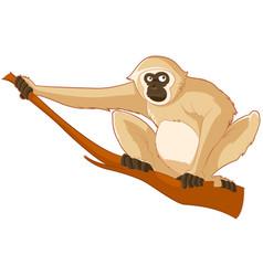 cartoon smiling gibbon vector image
