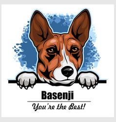 basenji - peeking dogs - breed face head isolated vector image